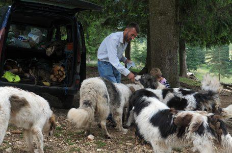 Isplativije je uzgajati rasne pse nego ovce