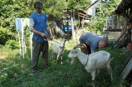 Zdravko Čečura dobio dvije koze od Bosanca iz Amerike