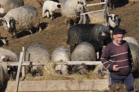 Djevojke ne žele ovčare za muževe