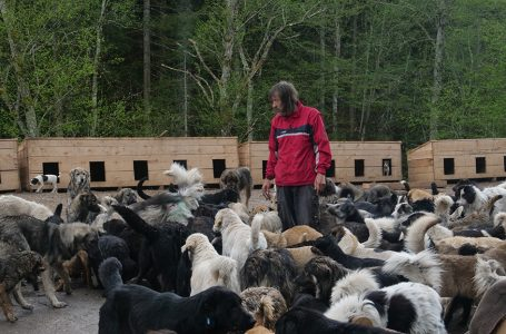 Munib brine o 250 pasa u bugojanskom azilu