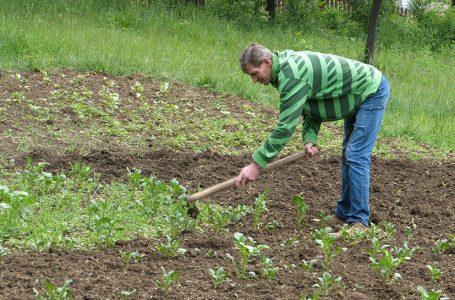 Ferid Sinan uzgaja povrće i otvara novu jamu
