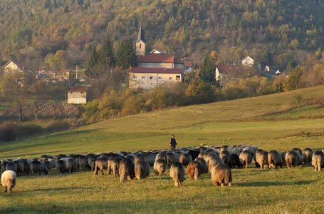 Janjci na farmi Vuković stižu kao da je proljeće