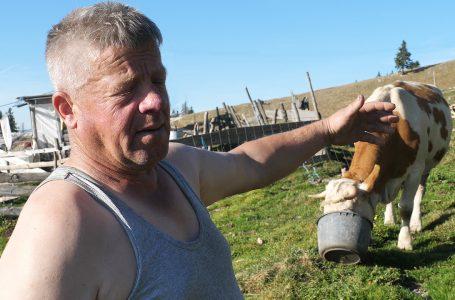 Brici ovce donesu više novaca nego da radi u Njemačkoj na baušteli