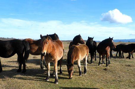 Uzgoj konja i praćenje satelitom